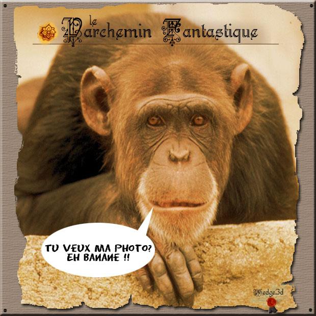 Singe drole centerblog - Petit singe rigolo ...