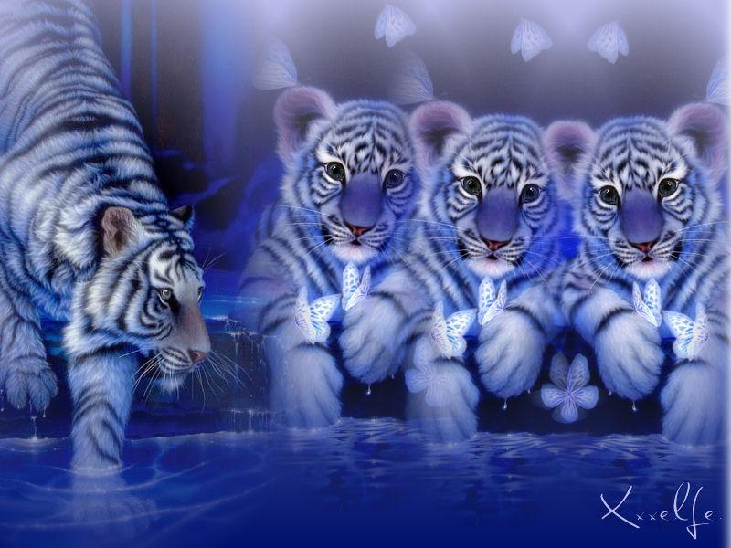 Fond D Ecran Bebe Tigre Blanc